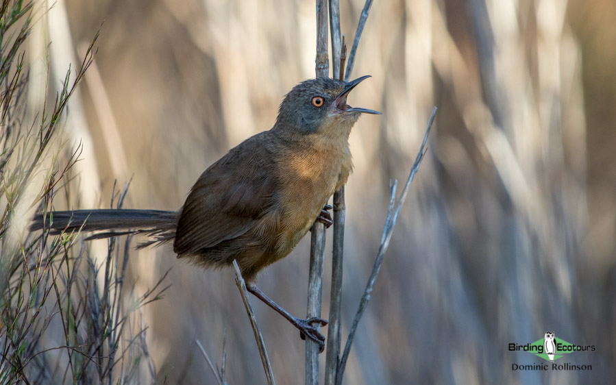 Agulhas Plains birding tours