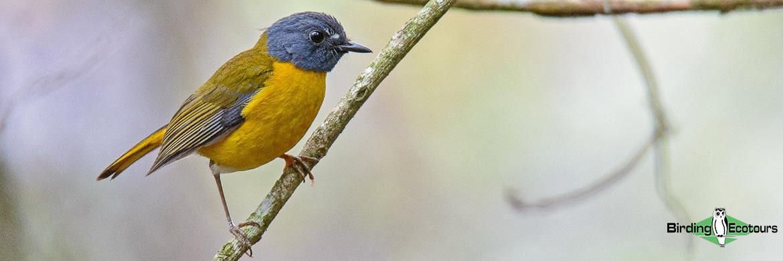 Zimbabwe and Mozambique birding tour