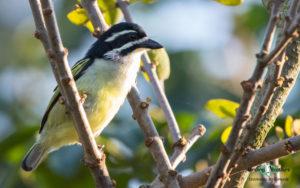 Durban birding tours