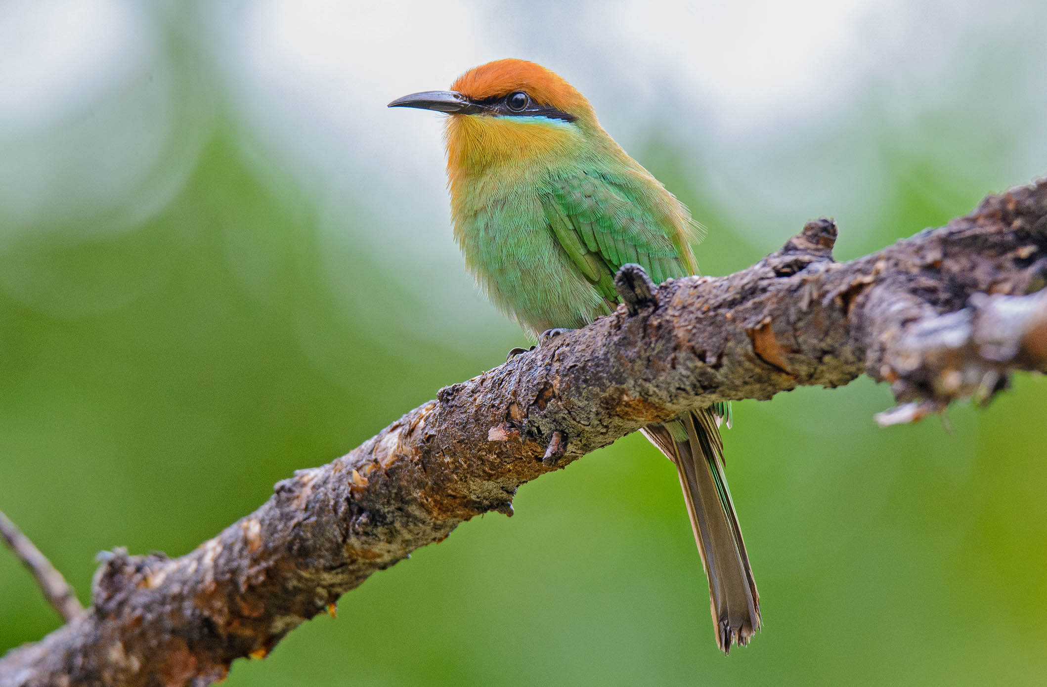 Birding Tour Malawi: 15-day Birding Adventure December 2018