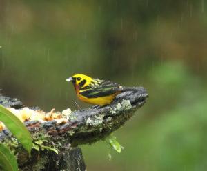South Peru birding tour