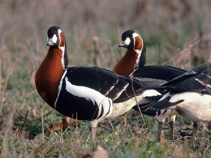 Birding Tour Bulgaria: Winter Birding Wonderland February 2020