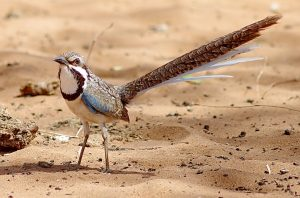 Madagascar Birding Tours - Birding Ecotours