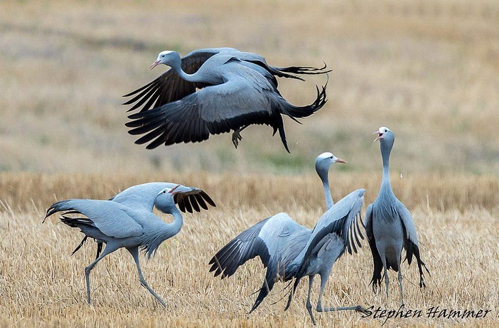 2-day Agulhas Plains (Overberg) Birding Trip