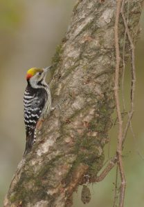 India birding tour