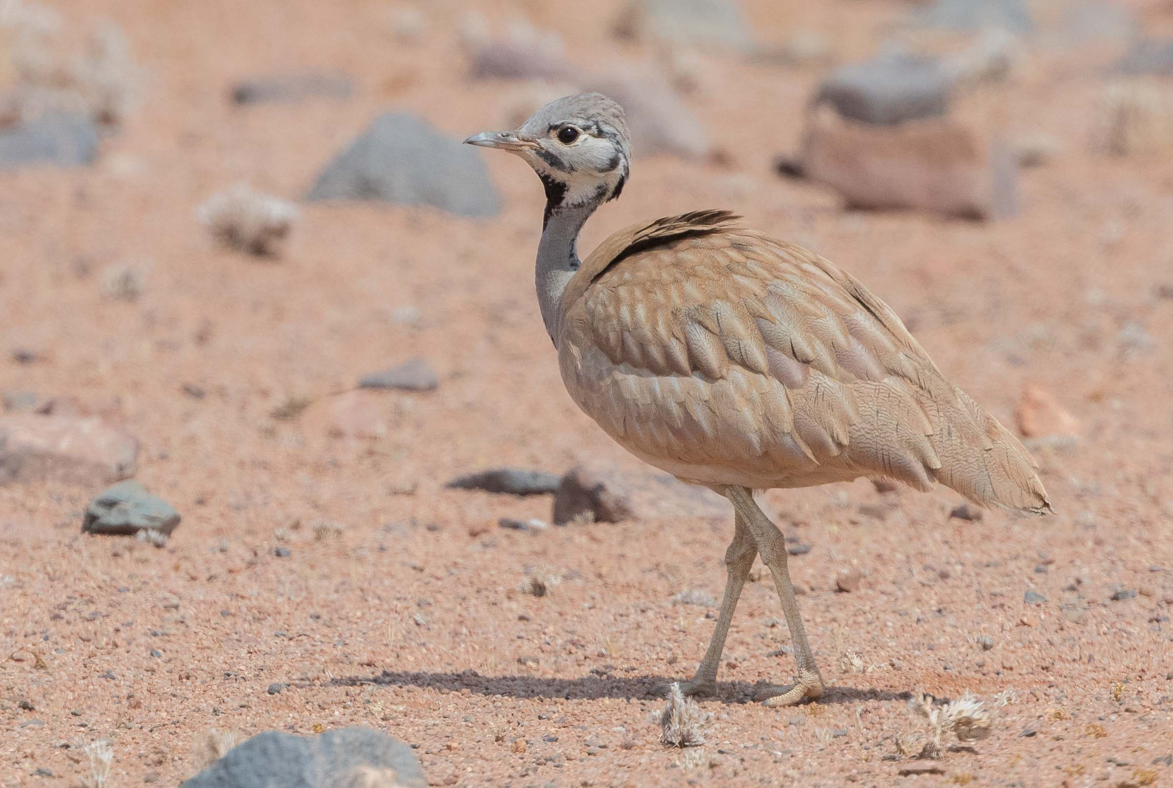Photo and Birding Tour Namibia – Quintessential Namibia September 2018