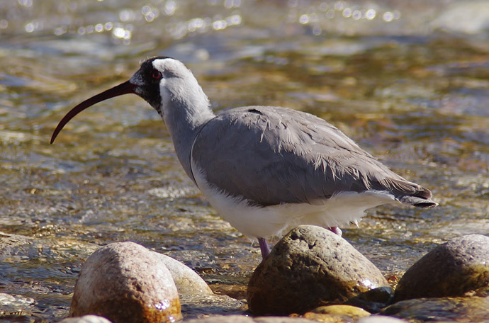 Birding Tour Bhutan: The Himalayas and Black-necked Crane November 2018