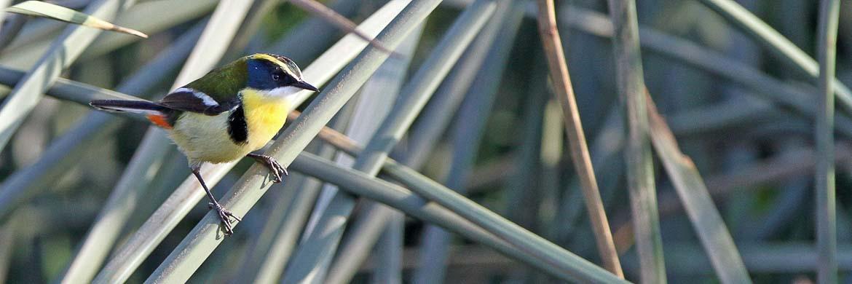 Bolivian birding tours