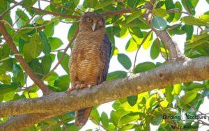 Northern Australia birding tours