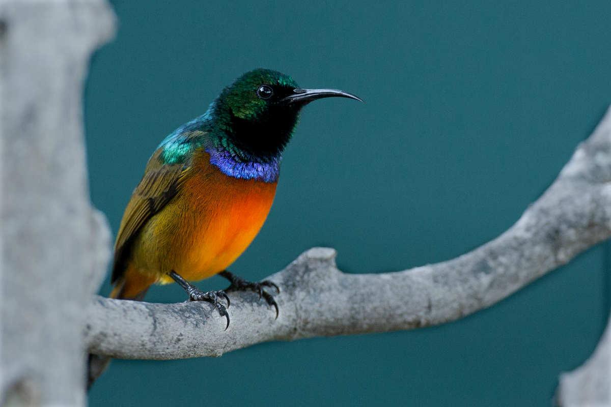 1-day Cape Peninsula Birding Tour