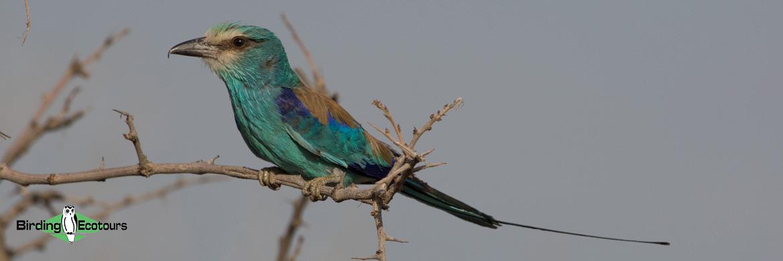 Ethiopian birding tours