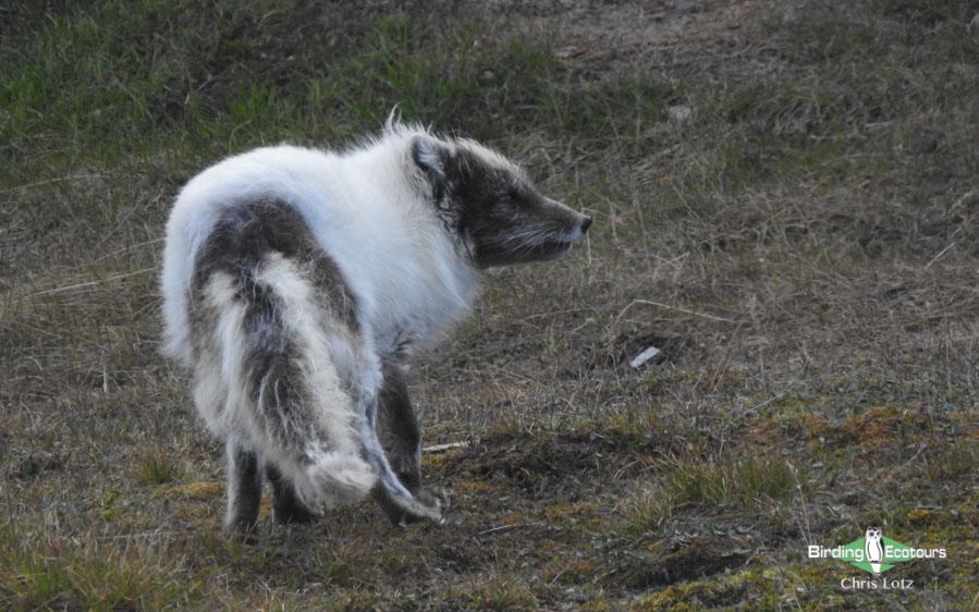 Svalbard birding cruises