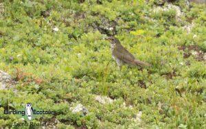 Maine birdwatching