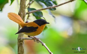 Southern India, Western Ghats and Nilgiri birding tours