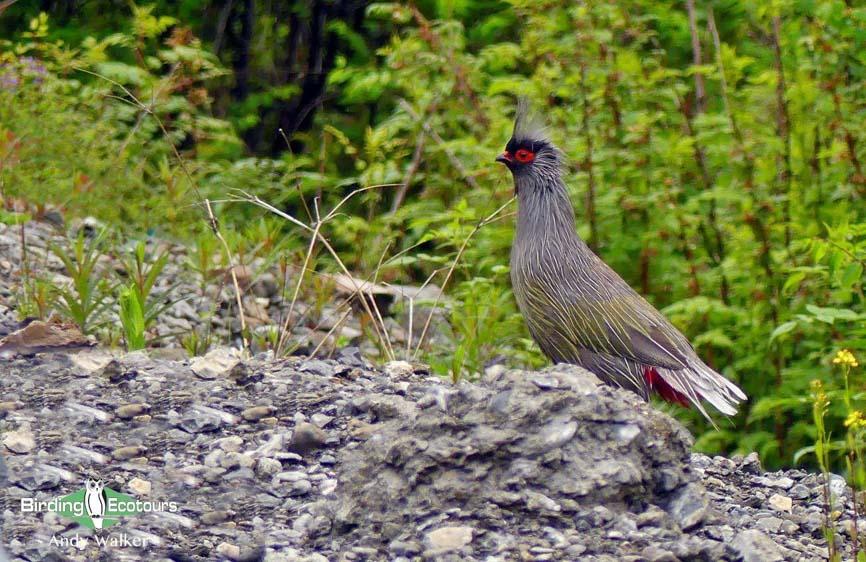 Qinghai birding tours