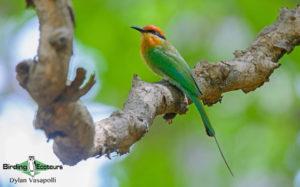 Zimbabwe and Mozambique birding tours