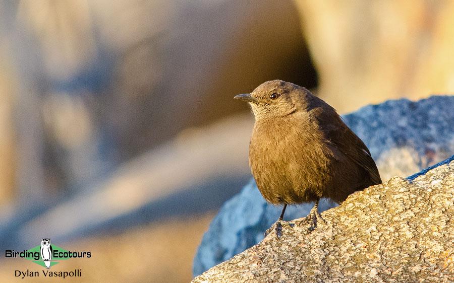 Zimbabwe birding tours
