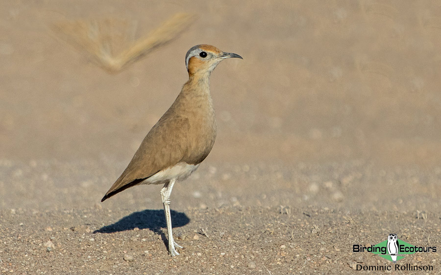Namibia, Okavango and Victoria Falls birding tours