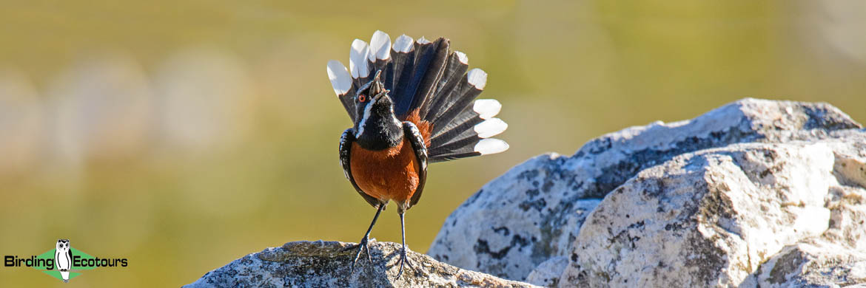 Cape, Namaqualand and Kalahari birding tours