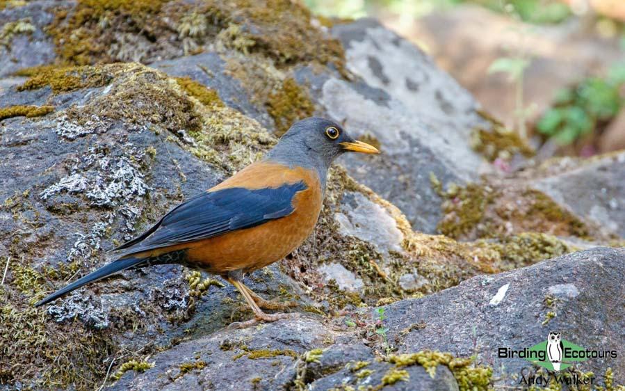 Yunnan birding tours