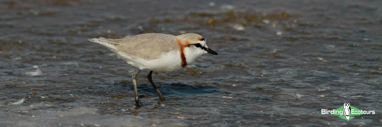 Namibia birding tours