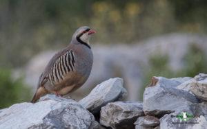 Greece birding tours