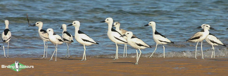 Northwest India birding tours