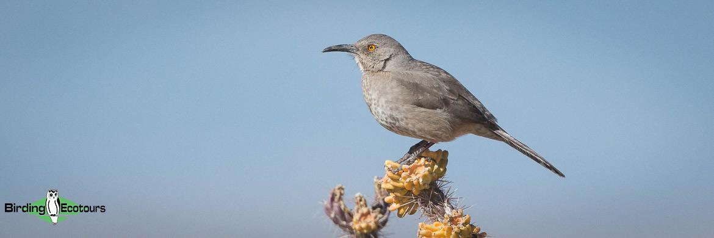 Colorado birding tours