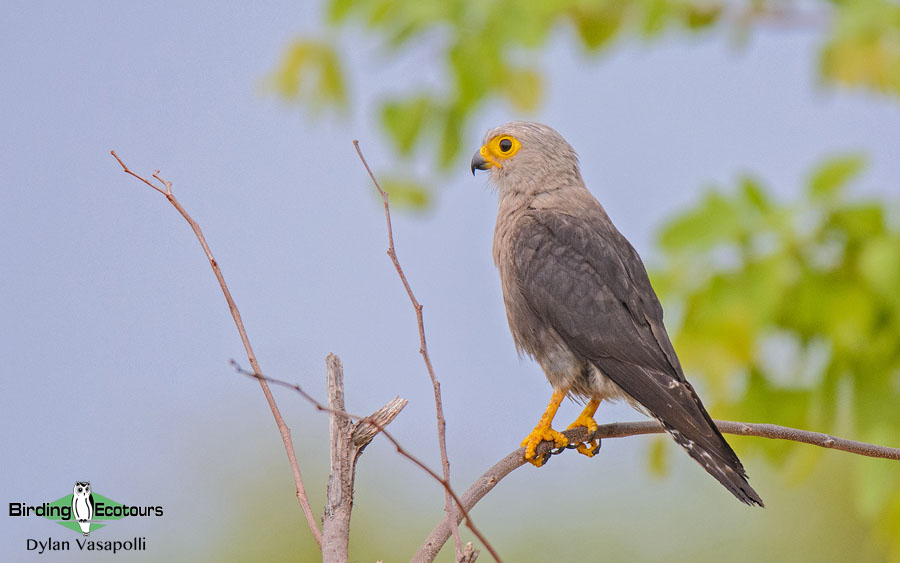 Zimbabwe and Mozambique birding tours
