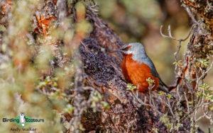Machu Picchu birding tours