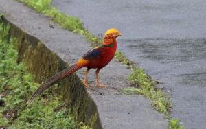China birding tours