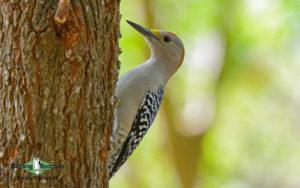 Texas birding tours