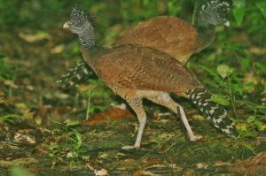 Costa Rica Escape birding tour