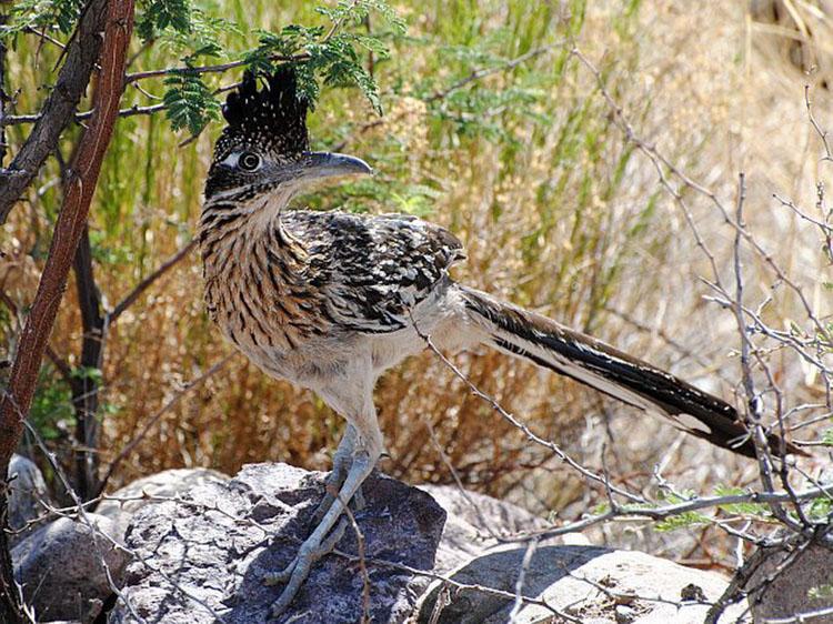 California birding tours