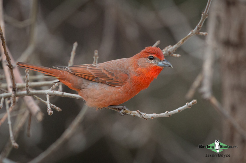 California birding tours