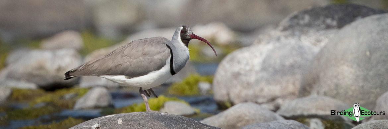 Northeast India birding tours