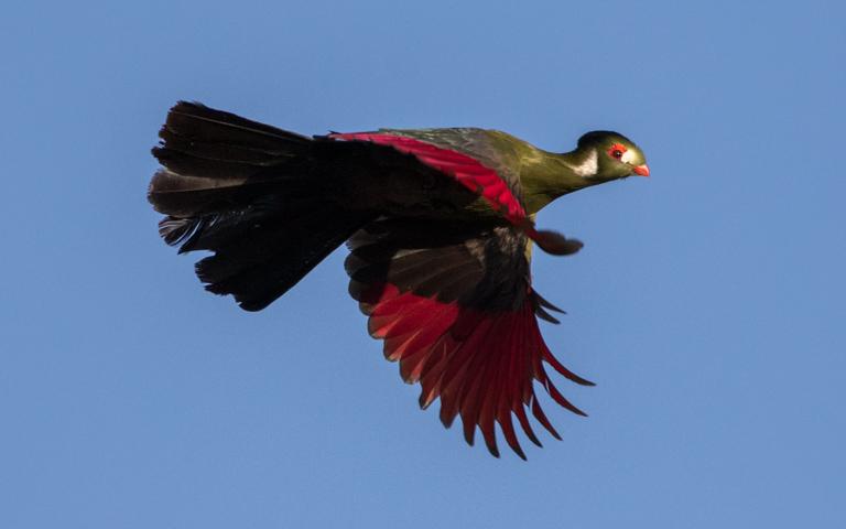 Birding Tour Ethiopia: Complete Abyssinia March 2020/2021