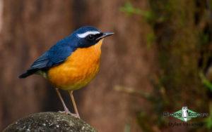 Sri Lanka birding tours