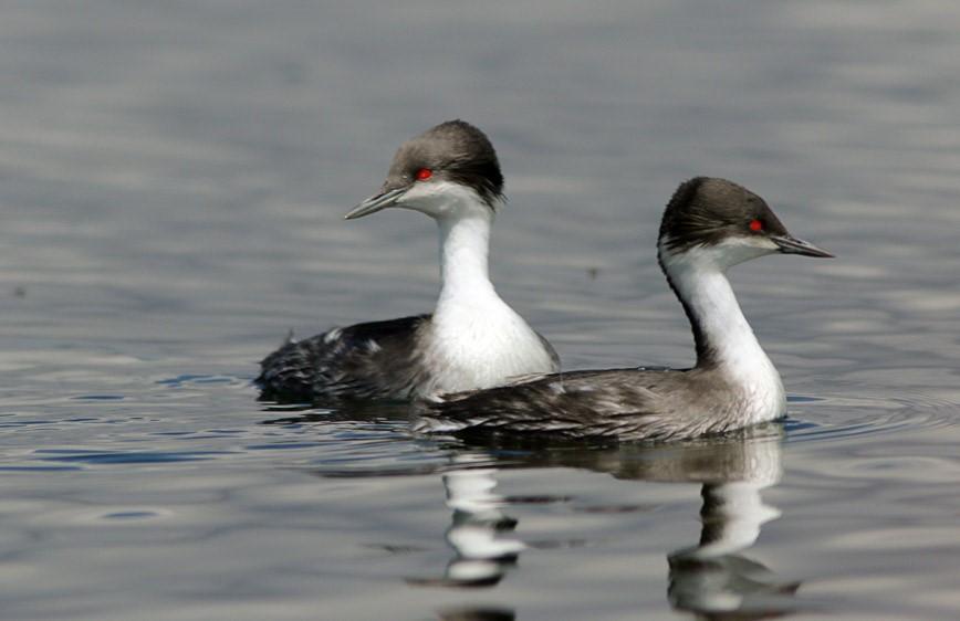 Central Peru birding tours