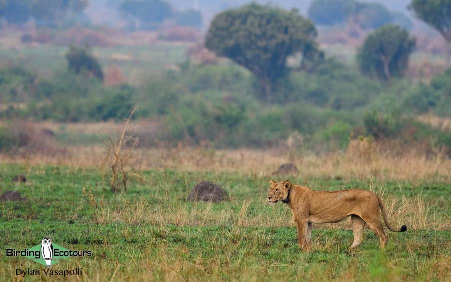 Uganda trip report