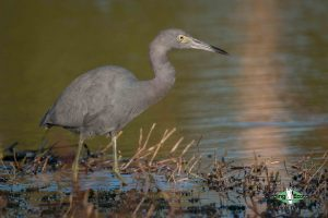 Alabama birding tours