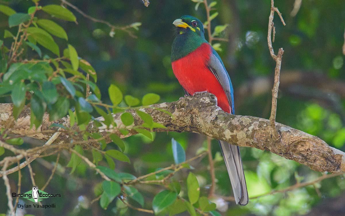 Cameroon birding tours