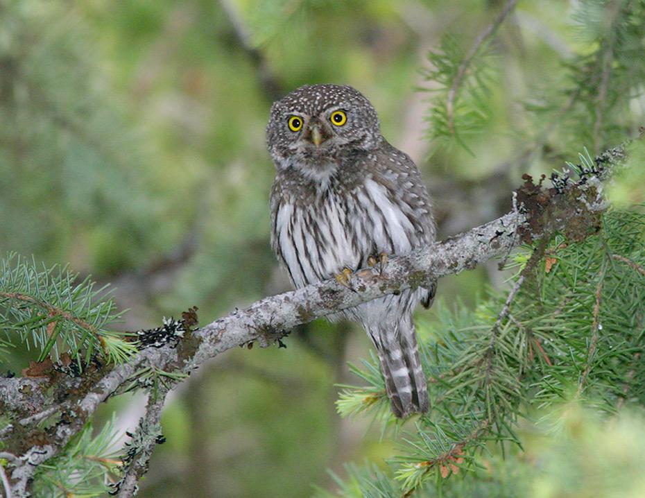Wyoming birding tours