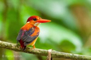 The Philippines birding tours