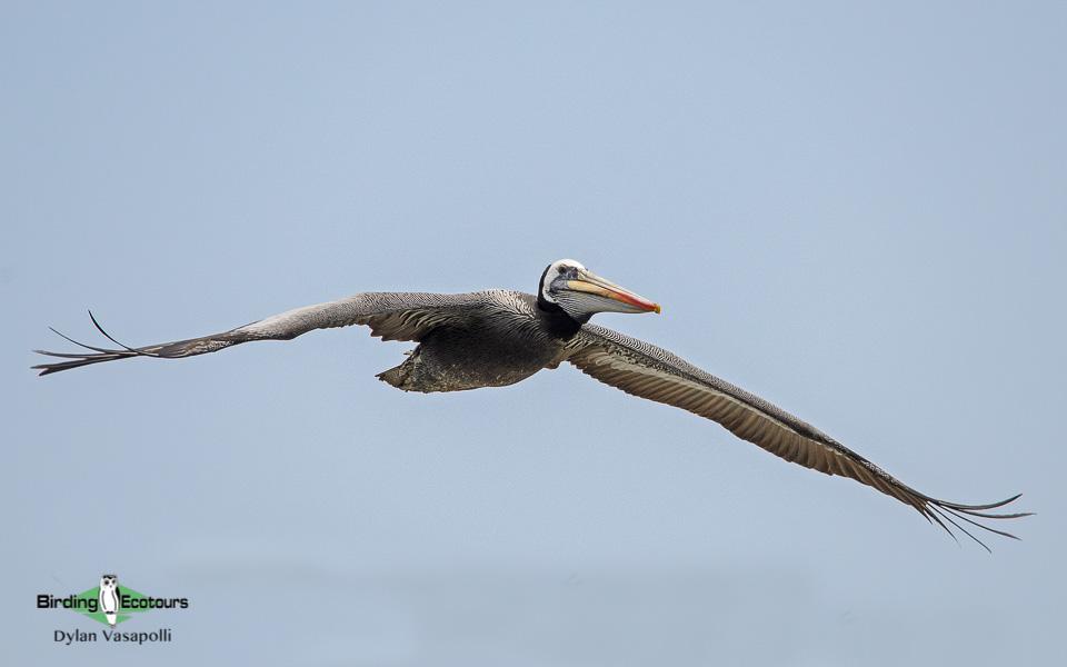 Central Peru birding tour