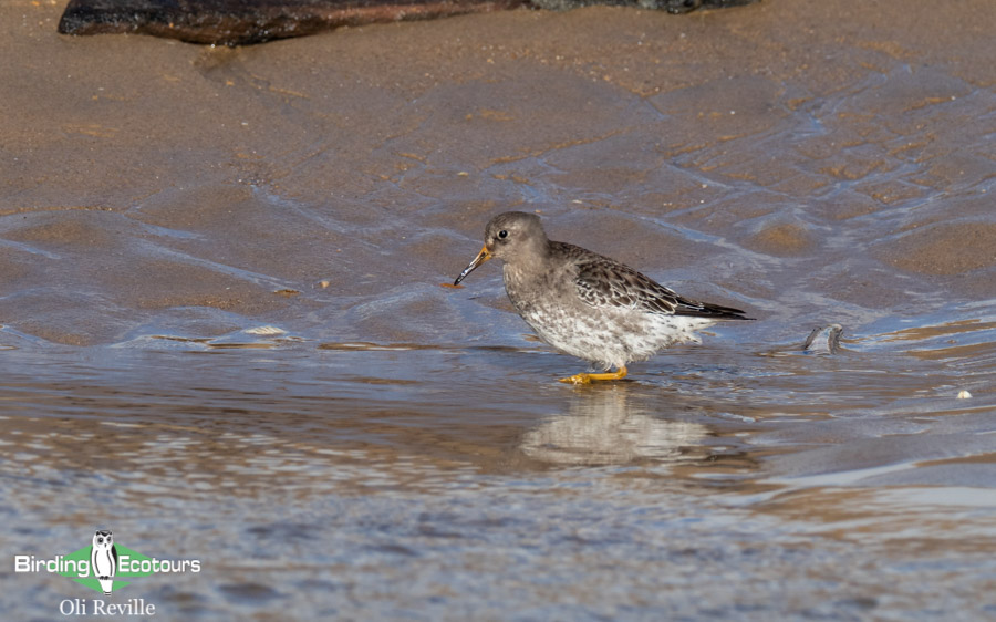 Norfolk birding tours