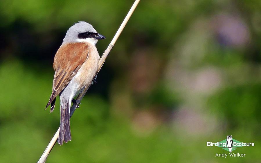 Spain birding tour