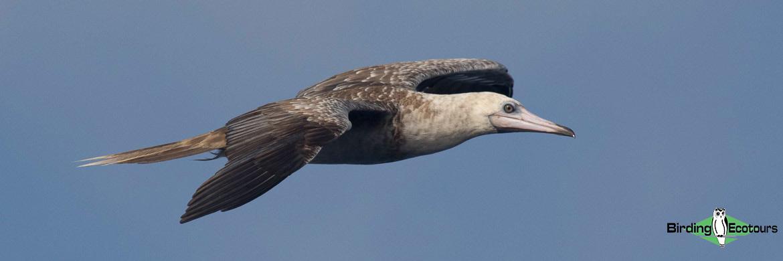 Galapagos birding tours