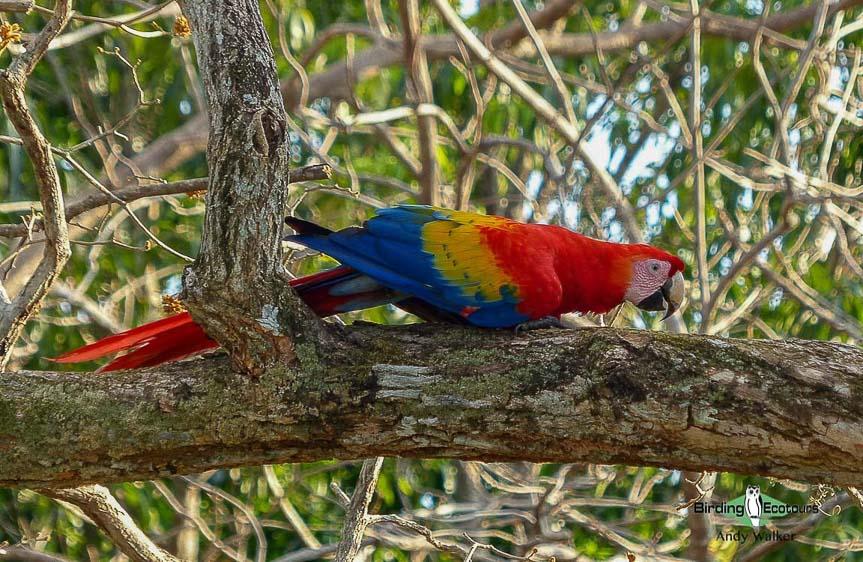Costa Rica specialties birding tour