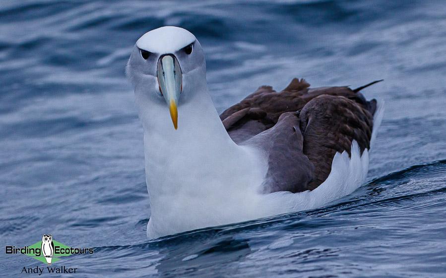 New Zealand birding tours